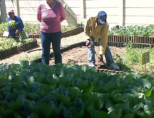Restoring dignity to unemployed farmworkers