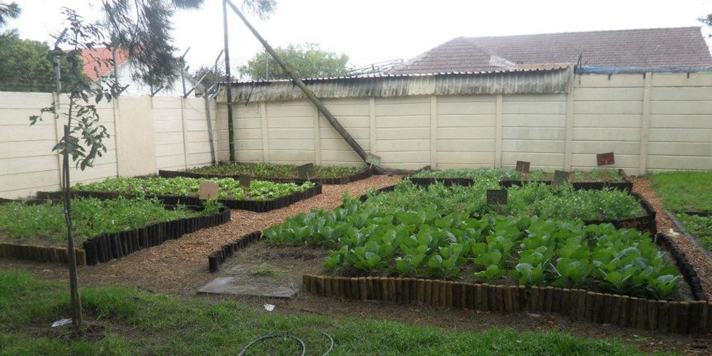 Orphanage After - Vegetable Garden